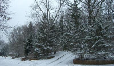 snow031708.jpg