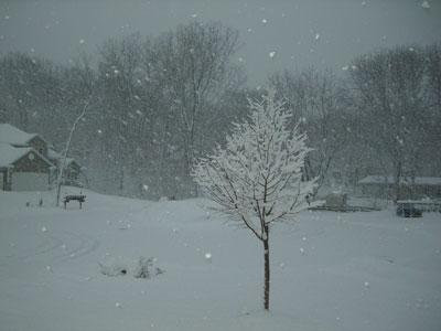 snow032108.jpg