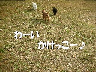 オレオ 11.26 宝ヶ池 052