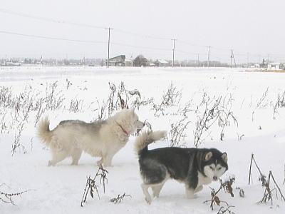 小春・吹雪