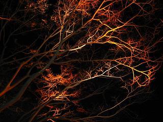 東京ファンタジアー樹
