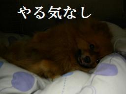 ブログ 025new