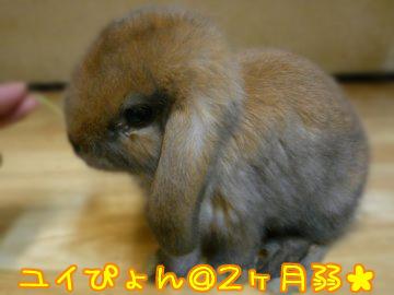 busuP1130746.jpg