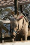 馬トナカイの角