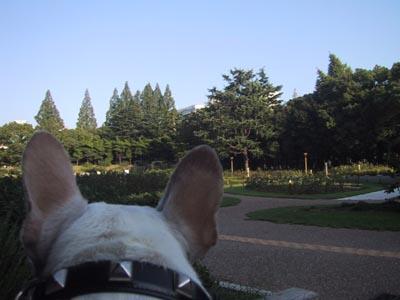 8060921夕暮れの公園