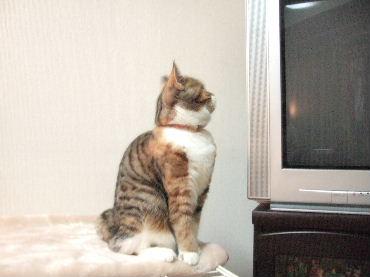 2007_1126okinawa0037.jpg