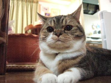 2007_1224okinawa0016.jpg