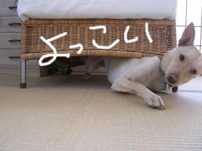 s-CIMG7190_20071211160727.jpg