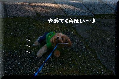 IMG_0502.jpg