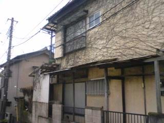 syokubutsu