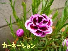 20070413201134.jpg