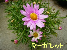 P3300598.jpg