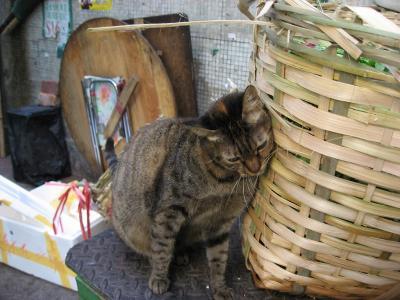 香港&日本2007Nov1 126