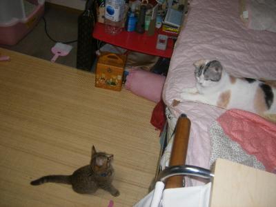 ベッドに上がらないタロウ