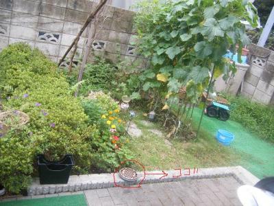 蚊取り線香庭