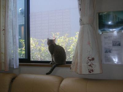外を見つめるタロウ