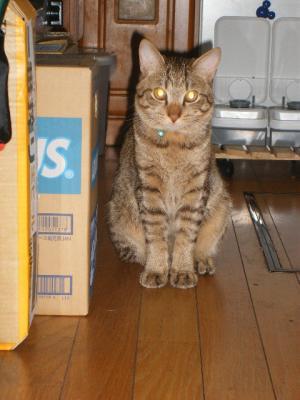 すっかり家猫顔のタロウ