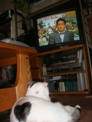 めざましテレビ好きにゃ