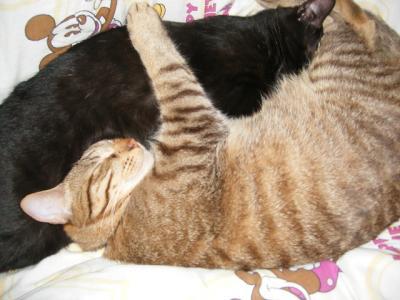 抱き合って寝てるタロクロ