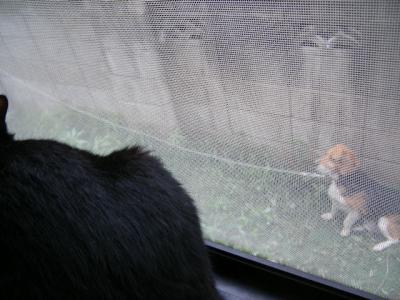 北側の庭にいたレオ兄ちゃんを見ていました。