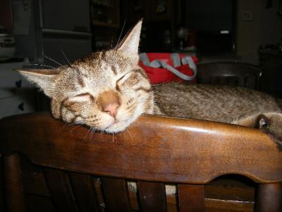 可愛いアップの寝顔