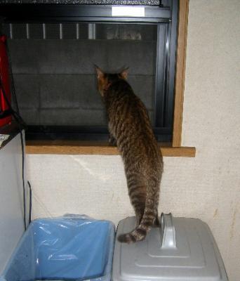 外を見るタロウ