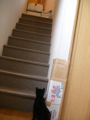 階段の真ん中で