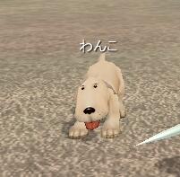 20071218わんこ