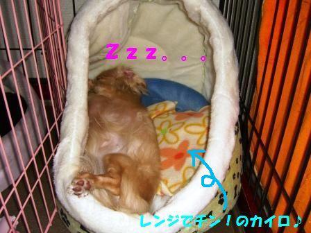 b1_20071221043821.jpg