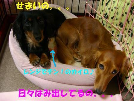 b3_20071221043942.jpg
