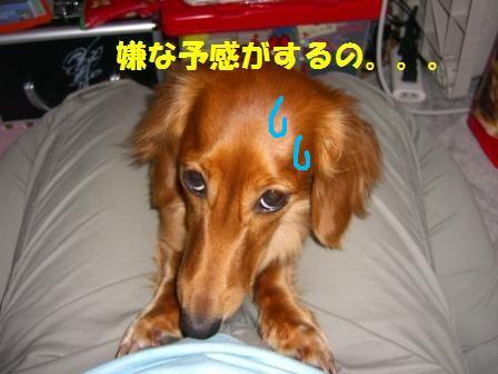 hamigaki11.jpg