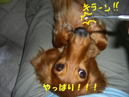 hamigaki21.jpg