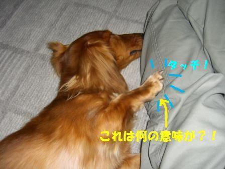 hamigaki61.jpg
