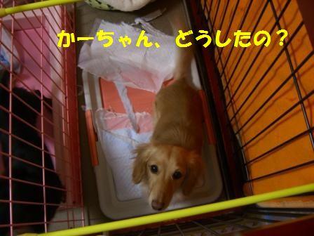 shi-to.jpg