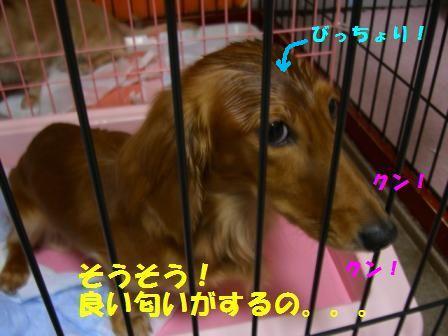 shi-to4.jpg