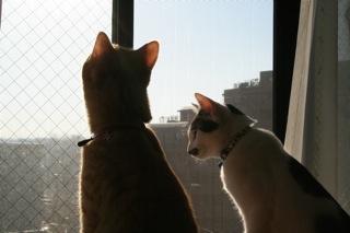 小梅&アニ朝の風景