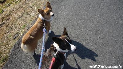 散歩だ、散歩だ?