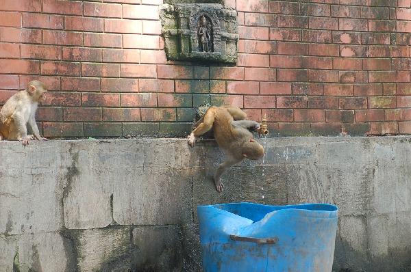 14_nepal_town_068.jpg