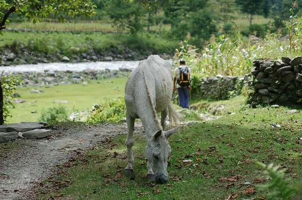 15_nepal_himalaya_037.jpg