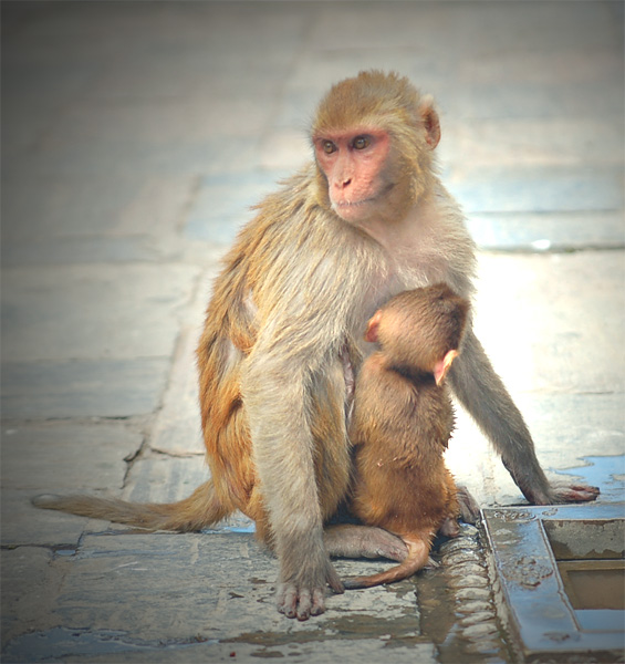 hensyu14_nepal_town_093.jpg