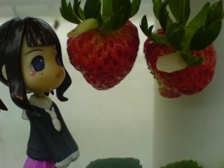 美味しそうなイチゴ