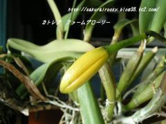 KIF_2600-1.jpg