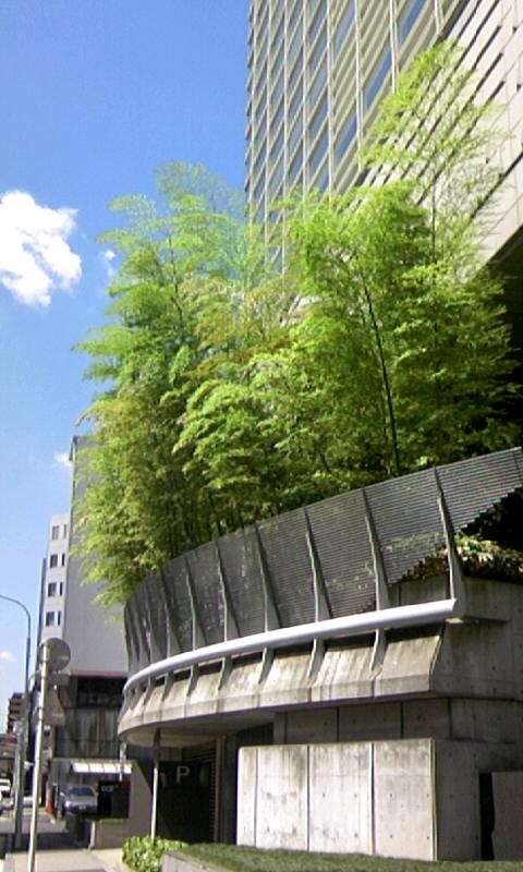 京橋の竹林
