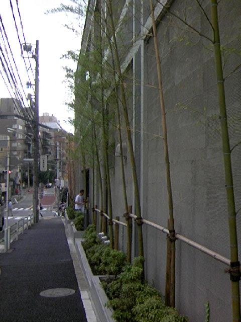 三田伊皿子マンションの竹林