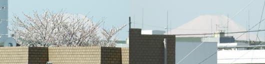 晴れの富士