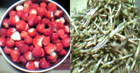 イチゴとツクシ