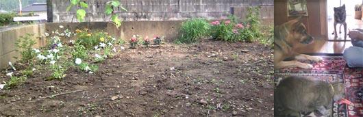 妻の庭7月