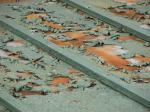 トタン屋根の劣化のアップ