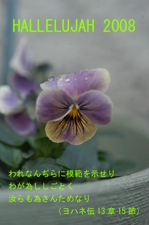 newyear4.jpg