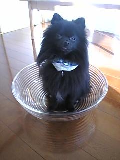 犬ボール1